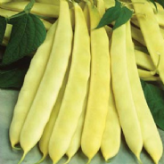 Dwarf french bean Capitano 30 seeds